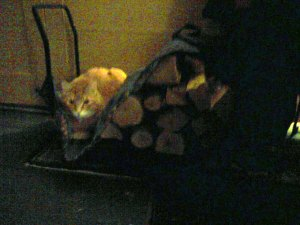 Cat in the Wood Bin
