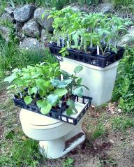ToiletGarden