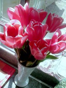 TulipFavs